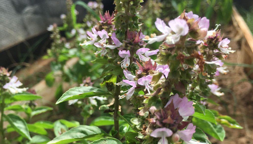 foon bonaire greenhouse