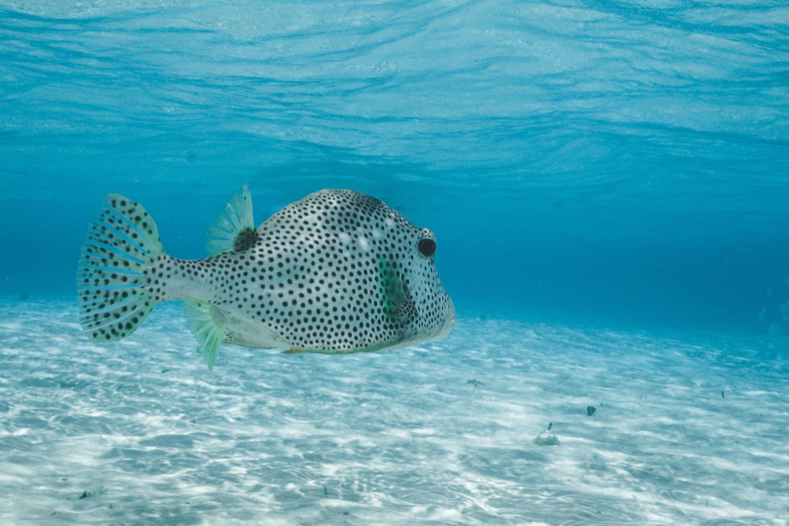 fish snorkeling destination bonaire